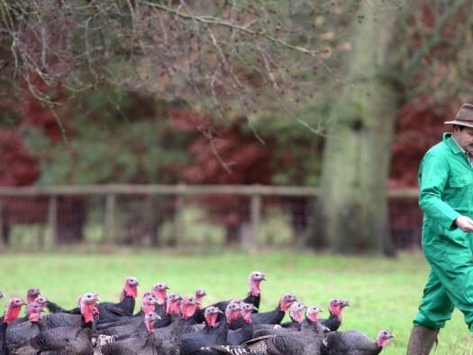 """Millions Of Britons Could Face """"National Shortage"""" Of Turkeys This Christmas"""