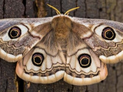 What Is The Spiritual Meaning Of A Moth?