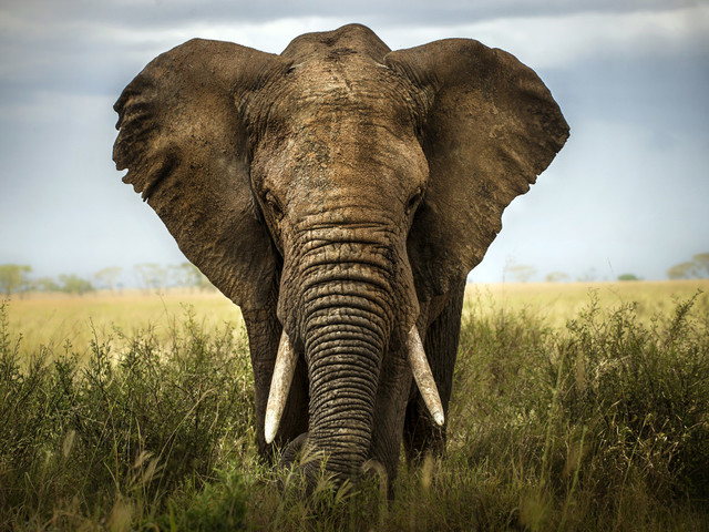 Animal welfare groups sue to stop big game imports