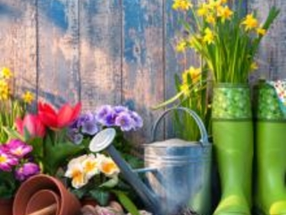 7 Cheap Gardening Ideas and Tips