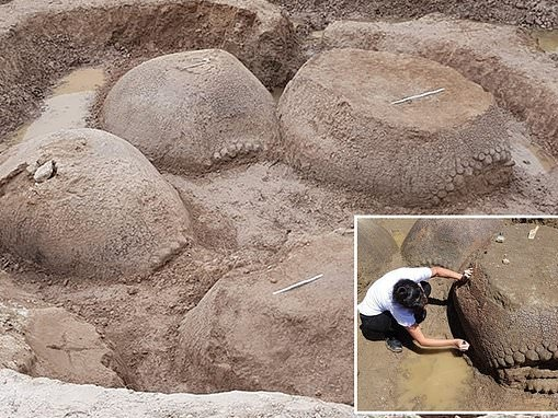 Shells of 20,000-year-old armadillos the size of Volkswagen Beetles found in Argentina
