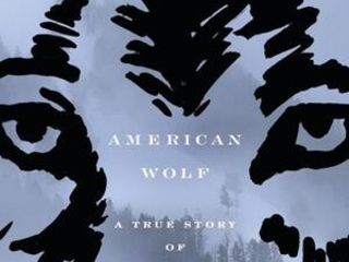 Review: 'American Wolf' explores clash over the gray wolf
