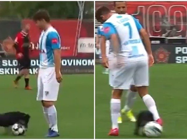 WATCH: Pitch-invading dog shows pedigree by NUTMEGGING player in Bosnian league
