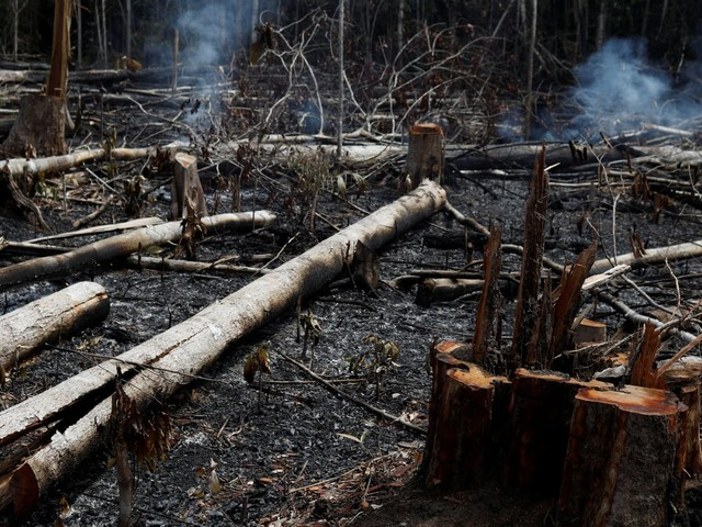 The US-China trade war is helping drive the massive fires burning the Amazon rainforest