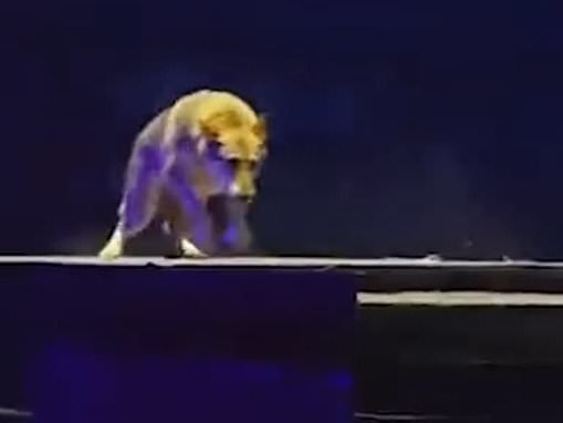 Wolves chase actors across stage during live show in China
