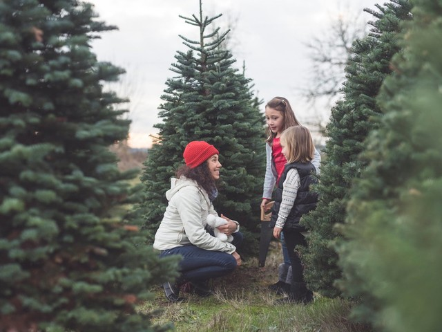 10 Things You Should Know Before You Cut Down Your Own Christmas Tree