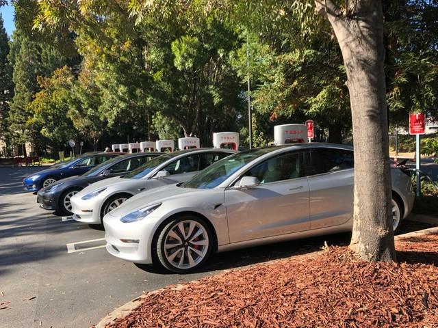 Green Clash: German Environmentalists Protest Tesla Factory