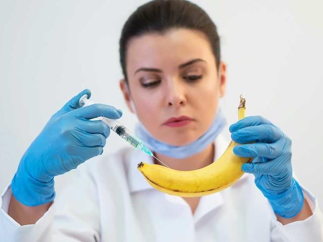 Do We Need a GMO Banana?