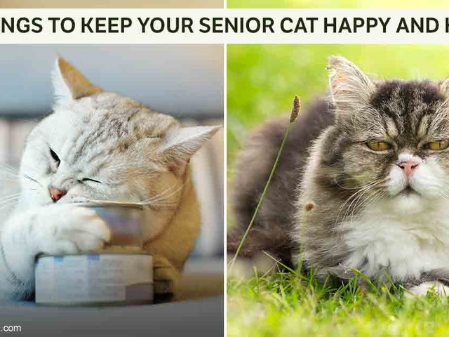 Do You Make This Feeding Mistake With Your Senior Cat?