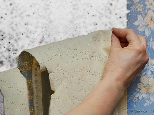 Wallpaper Can Be a Source of Toxic Mold