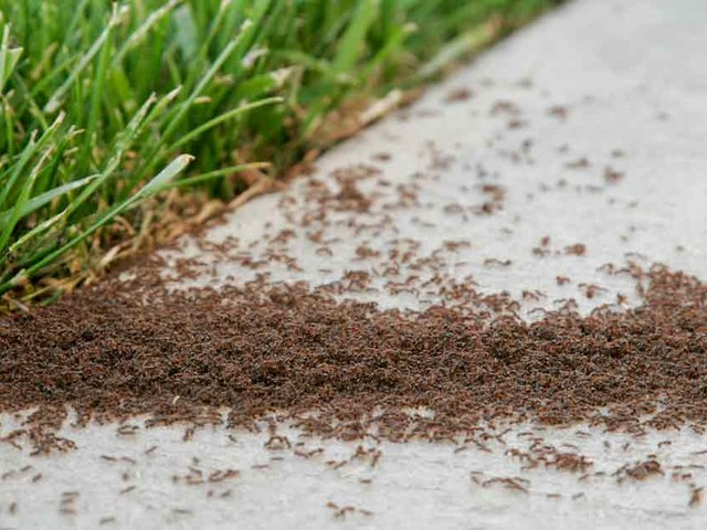 Homemade Ant Bait — Less Toxic and More Effective