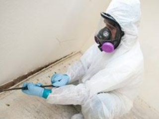 Mold Removal | Black Mold Removal | Mold Remediation Services