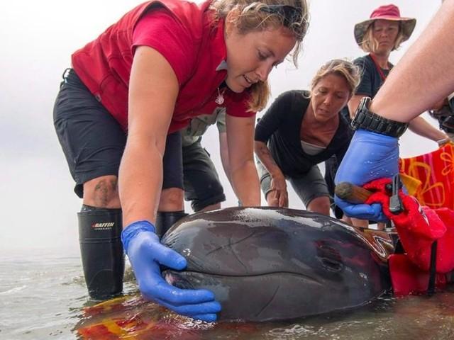 A False Killer Whale At The Vancouver Aquarium Has Died