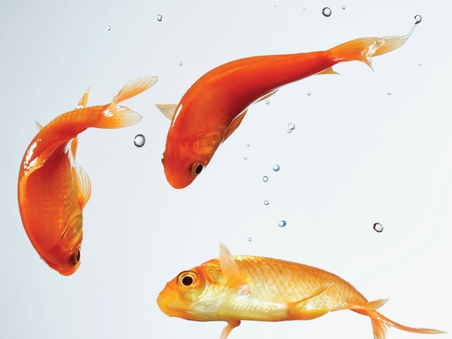 No more fish: Kimpton eliminates in-room aquariums