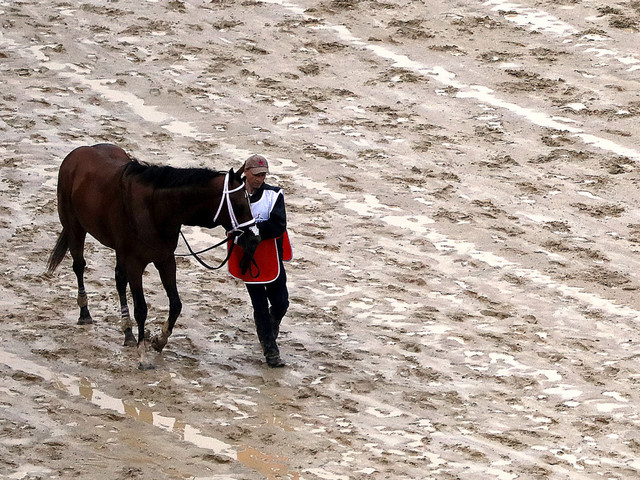Trump blasts Kentucky Derby decision to disqualify Maximum Security