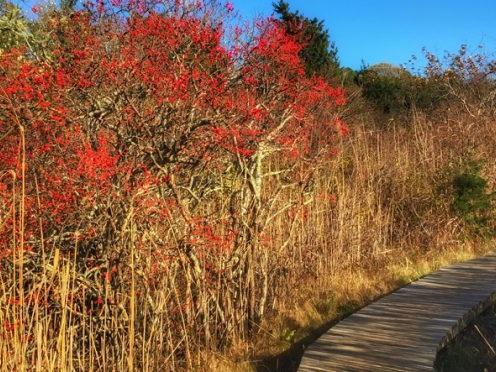See the Astounding Cape Cod Foliage