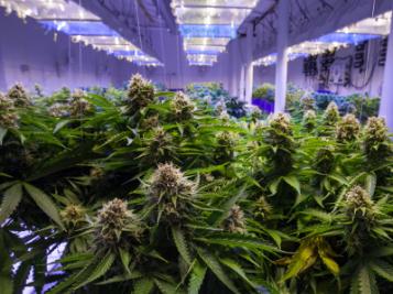 Five States Legalize Marijuana For Recreational Or Medical Use + Oregon Decriminalizes The Possession Of Small Amounts Of Hard Drugs