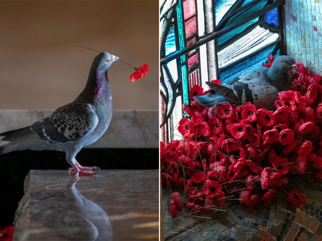 Pigeon builds 'patriotic' poppy nest at Tomb of the Unknown Soldier