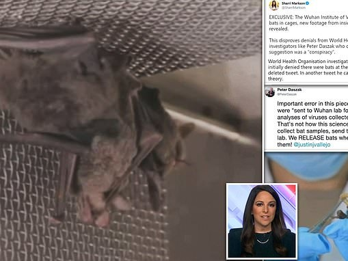 Unearthed video proves bats WERE kept at Wuhan lab yet WHO member tweeted 'they DO NOT have bats'