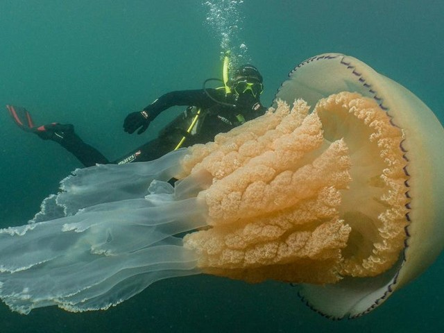 Thousands of animals around the world are at risk of extinction. But not jellyfish — they're thriving in warm, polluted water.