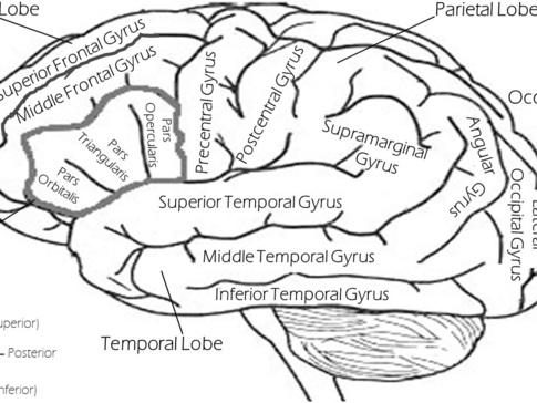 Sleep, Brain Development, and Mental Health in Children