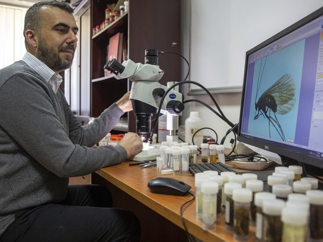 Kosovar biologist calls newly found insect after coronavirus