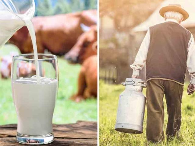 Will Raw Milk Save Dairy Farmers?