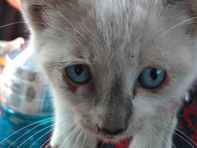 People are throwing kittens from moving cars on bridge and highway, NC sheriff says