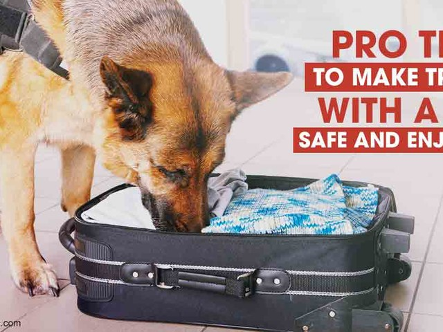 One of the Most Deadly Pet Mistakes You Can Make
