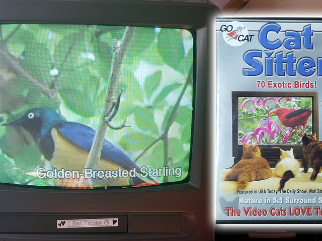 What We're Watching: How a DVD for Cats Got Me Hooked on Bird Videos