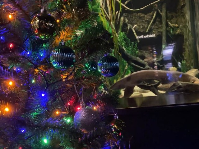 See electric eel light a Christmas tree