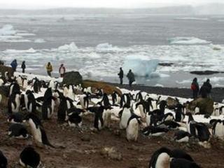 Researchers sound alarm over Antarctic penguin chick deaths
