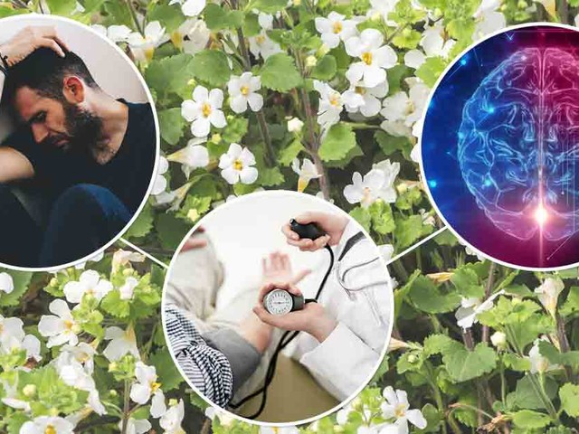 How Bacopa Can Help Improve Your Cognitive Function