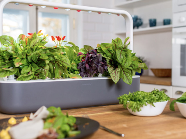 How to grow herbs and veggies indoors — even in a dark kitchen