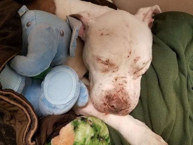 Abused Dog Snuggles Up With His First Toy — And Finally Feels Safe
