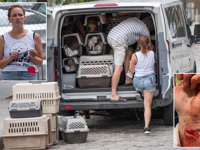 Waldo's Rescue Pen left vulnerable dogs suffering, ex-employee alleges