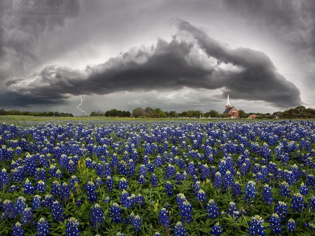 "Wildflower forecast says Texas on track for a ""hit and miss"" season"