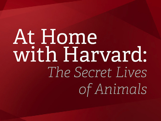At Home with Harvard: The Secret Lives of Animals
