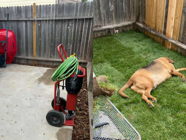 Rescue Dog Never Had His Own Yard Before — So His Mom Built Him One