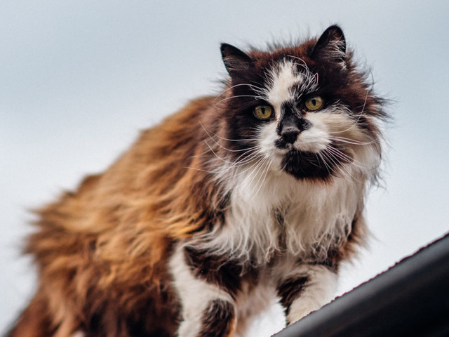 Mayhew's Trap, Neuter, Return programme proves to be a lifeline for feral cats in lockdown