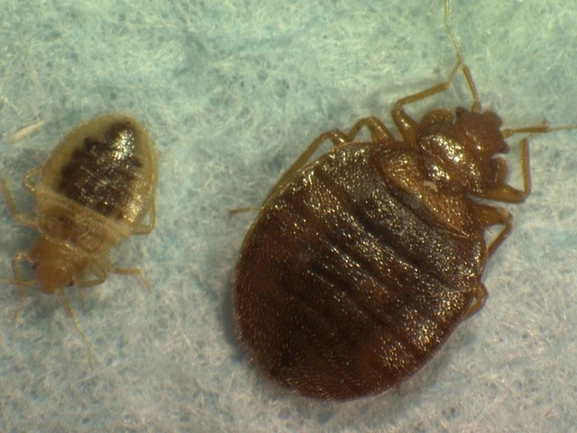 Park La Brea apartments loses $3.5-million bedbug lawsuit, lawyer says