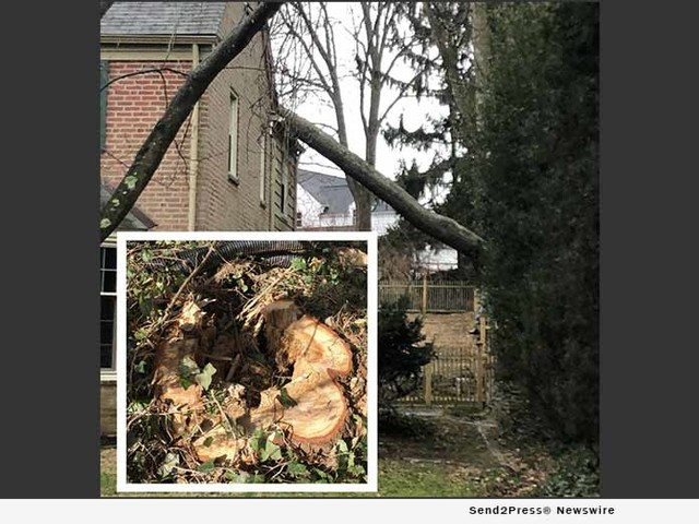 Tree Crashes on to Glenside Home because of Hidden Danger Inside Trunk