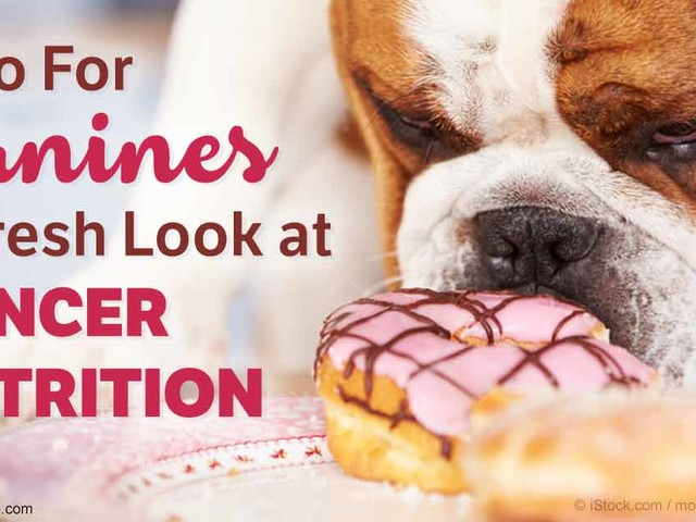Dr. Ian Billinghurst's Targeted Nutritional Therapy, Which Includes a Ketogenic Diet, Can Kill Your Dog's Cancer