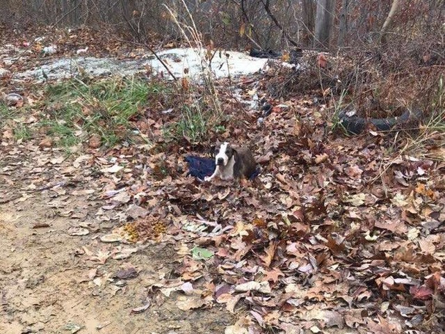 Woman Driving Down Mountain Sees A Dog Huddled Up In The Leaves