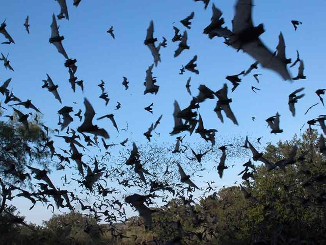 Why Bats Are Ecological Superheroes