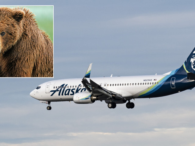 Grizzly end for brown bear in collision with passenger jet during landing at Alaskan airport