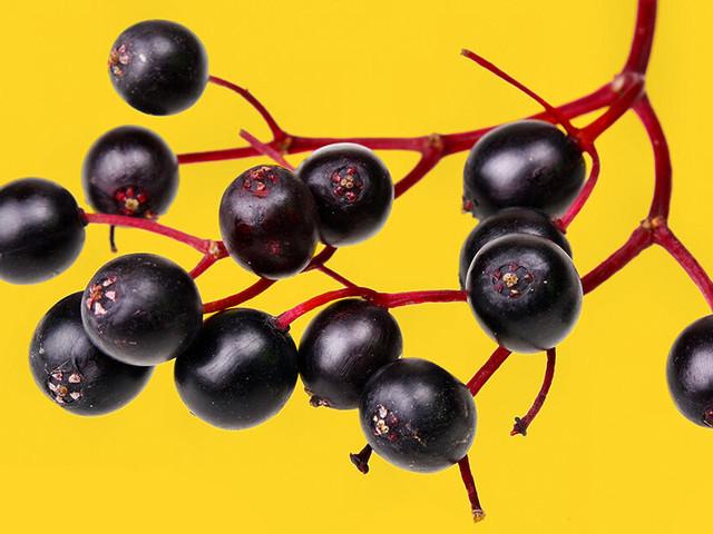 Respect Your Elders: The (Possible) Benefits of Elderberry