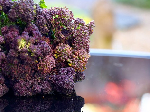 Purple Sprouting Broccoli Is A Winter Crop Worth Growing