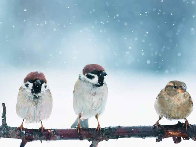 How Wild Animals Survive Freezing Winter Weather