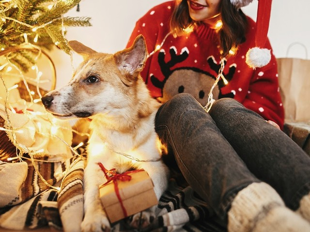 8 Pictures Of Dogs & Christmas Trees To Wish You A Happy Howlidays